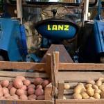 Lanz 24 - gezeigt mit unterschiedlichen Kartoffelsorten